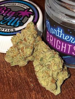 Buy Northern Light Online Australia Buy Northern Light Online Melbourne Order medical marijuana Online Brisbane Northern Light For sale In Ireland Buy Northern Light Europe Buy Northern Light Online Australia