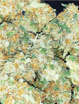 Buy Queen Mother Goji Online Europe Buy weed online Australia Buy Medical Online Ireland Order weed online Germany Buy Marijuana Online Italy Order thc vape juice in France