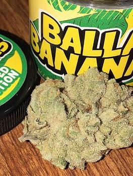 Buy Balla Banana online Scotland Buy Weed In Saudi Arabia Order High THC Weed Europe Buy Marijuana Edibles In Scotland Order THC Vape Juice Online Ireland